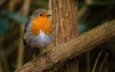 /sites/default/files/styles/teaser/public/2021-05/european-robin-sitting-tree-branch-forest.jpg?h=11b34633&itok=hgukIsnE